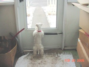 Tillie in Meeker CO 2005